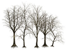 3D trees isolated. 3D designs of bare trees isolated on white background stock image