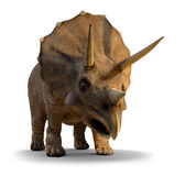 3d Triceratops Royalty Free Stock Images
