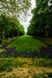 D?uga aleja z zielonymi drzewami, traw? i kwitn?cymi kwiatami w Cismigiu parku, tulipan?w i niezapominajkowych, Bucharest, Rumuni obrazy royalty free