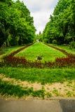 D?uga aleja z zielonymi drzewami, traw? i kwitn?cymi kwiatami w Cismigiu parku, tulipan?w i niezapominajkowych, Bucharest, Rumuni zdjęcie royalty free