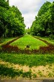 D?uga aleja z zielonymi drzewami, traw? i kwitn?cymi kwiatami w Cismigiu parku, tulipan?w i niezapominajkowych, Bucharest, Rumuni zdjęcia royalty free