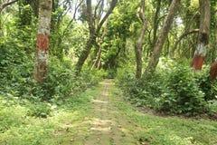Długa droga w ogródzie pod drzewem fotografia stock