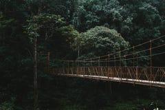 D?ugi baldachimu przej?cia most w lesie fotografia stock