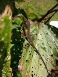 długi jaszczurka ogon Fotografia Stock