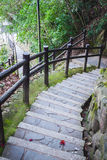 Długi schody ziemia w lesie zdjęcie stock