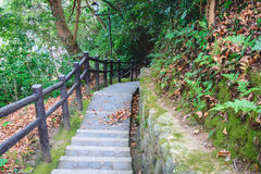 Długi schody ziemia w lesie obraz stock
