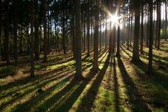 długie cienie jesieni Fotografia Royalty Free