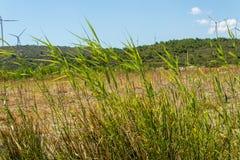 Długie zielone uprawy od rolnego terenu fotografia royalty free