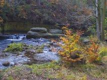 Długiego ujawnienia strumienia magiczna lasowa zatoczka w jesieni z kamieniami mo Obrazy Stock