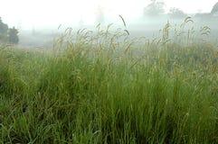 długo trawy Zdjęcia Stock