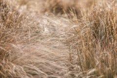 długo trawy Zdjęcie Royalty Free