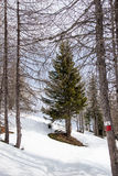 D'Ultimo de Ultental - de Val Imagen de archivo libre de regalías