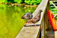 D'une vue d'oeil du ` s d'oiseau photo libre de droits