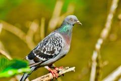 D'une vue d'oeil du ` s d'oiseau photos stock
