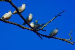 D'une vue d'oeil du ` s d'oiseau photographie stock