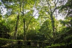 Dżungla Zdjęcie Stock