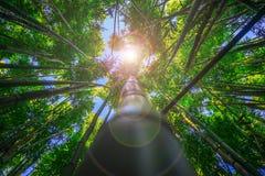 Dżungla Obrazy Stock