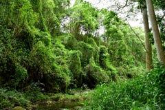 Dżungla brzeg rzeki w Kauai Hawaje Obrazy Stock