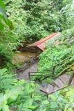 Dżungla kroki Obrazy Royalty Free