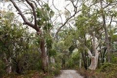 Dżungla lasów Fraser wyspa, Australia Obrazy Royalty Free