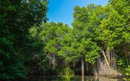 Dżungla las Obraz Royalty Free
