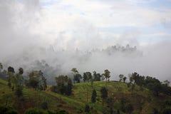 Dżungla las w mgle Zdjęcia Royalty Free