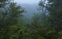 dżungla mglista Zdjęcie Royalty Free
