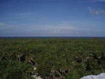 Dżungla obok morza Zdjęcie Stock