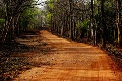 Dżungla safari droga Zdjęcia Stock