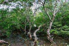dżungla Thailand Zdjęcia Stock