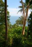 dżungla tropikalna Zdjęcia Royalty Free