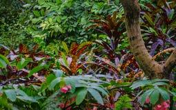 Dżungla Vegitation Zdjęcia Stock