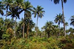 Dżungla w Afryka Fotografia Royalty Free