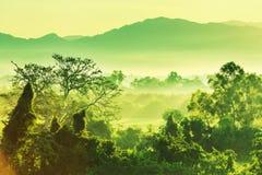 dżungla w Meksyk Zdjęcia Royalty Free