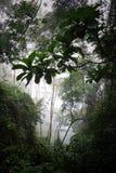 Dżungla w mgle Obraz Stock