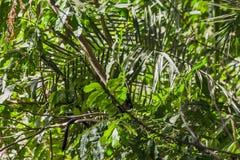 Dżungla w parku narodowym, Tanzania Zdjęcia Stock