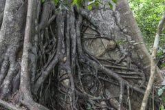 Dżungla w Zanzibar Zdjęcie Royalty Free