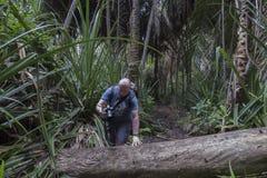 Dżungla w Zanzibar Zdjęcia Royalty Free