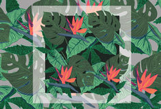 Dżungla wzór ilustracji