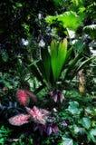 Dżungli febra Zdjęcie Royalty Free
