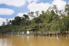 Dżungli Rzecznej krewetki gospodarstwo rolne Fotografia Royalty Free