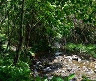 Dżungli rzeka w Kauai Hawaje Zdjęcie Stock