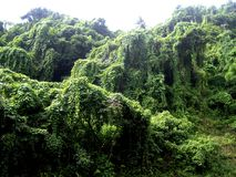 Dżungli St Vincent Obraz Royalty Free