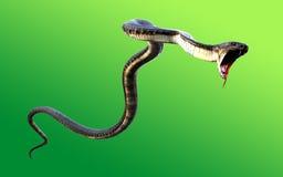 3d världs` s för konung Cobra The länge Arkivbild