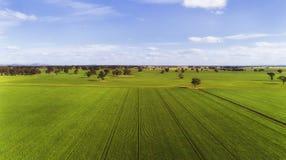 D VIC Agri zieleni pola mieszkanie Zdjęcie Royalty Free