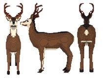 3d voxel deer Stock Image