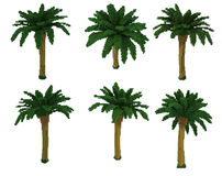 3d voxel palm tree. 3d image of palm trees made in retro voxel style.  on white background Royalty Free Stock Photography