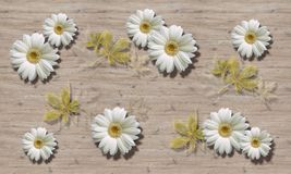 3d wallpaper, chamomiles on wooden boards background. Eco style royalty free stock photography