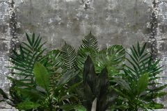 3d wallpaper, leaves of houseplants on concrete wall textured background. The original panel will turn your room in with the most recent world trends in stock images