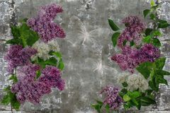 3d wallpaper, lilac flower on concrete wall textured background. The original panel will turn your room in with the most recent world trends in interior fashion stock photography